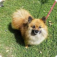 Adopt A Pet :: KENYON - Hesperus, CO