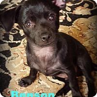 Adopt A Pet :: Benson - Gilbert, AZ