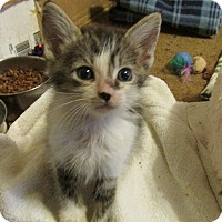 Adopt A Pet :: NOLAN - Acme, PA