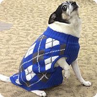 Adopt A Pet :: Sparky - Dayton, OH