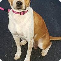Adopt A Pet :: Lady - Marlton, NJ