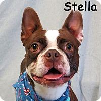 Adopt A Pet :: Stella - Warren, PA