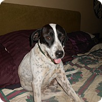 Adopt A Pet :: Freckles - North Jackson, OH