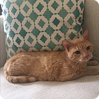 Adopt A Pet :: Lars - Addison, IL