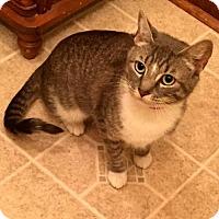 Adopt A Pet :: Pandora - White Bluff, TN