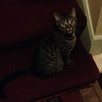 Adopt A Pet :: Oscarlina - Toledo, OH