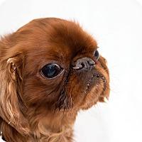 Adopt A Pet :: Lucky - Cumberland, MD