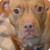 Adopt A Pet :: Charlotte - Reisterstown, MD
