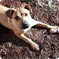 Adopt A Pet :: Sunshine - Allentown, PA