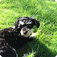 Adopt A Pet :: Allie-WATCH MY VIDEO!!! - Irvine, CA