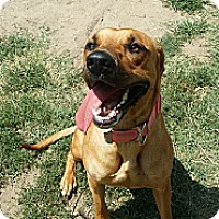 Adopt A Pet :: Brownie - Fort Riley, KS