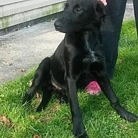 Labrador Retriever Mix Dog for adoption in Prestonsburg, Kentucky - pout