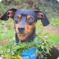 Adopt A Pet :: Fletcher - Fort Valley, GA
