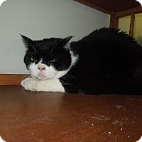 Adopt A Pet :: Casey - Medina, OH
