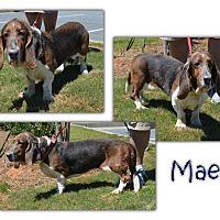 Adopt A Pet :: Mae - Marietta, GA