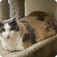Adopt A Pet :: Daisy Doo - North Hollywood, CA