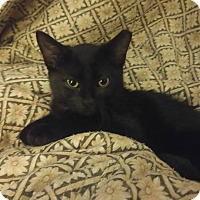 Adopt A Pet :: Mina - Whiting, IN