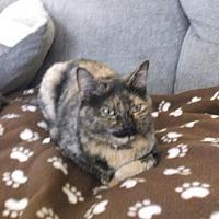Adopt A Pet :: Keeta - el mirage, AZ
