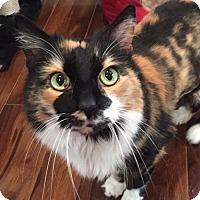 Adopt A Pet :: Roxi - Xenia, OH