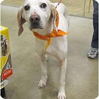 Adopt A Pet :: Al - Alexandria, VA