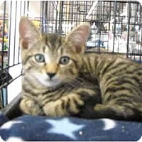 Adopt A Pet :: Aaron & Aiden - Riverside, RI