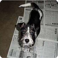 Adopt A Pet :: Kirby - Adamsville, TN