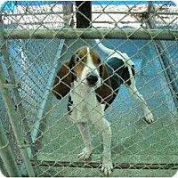 Adopt A Pet :: Seth - Huntington Station, NY
