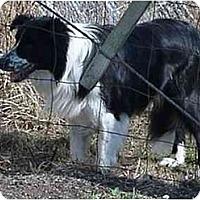 Adopt A Pet :: Tonto - Tiffin, OH