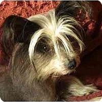 Adopt A Pet :: Gypsy - Rigaud, QC