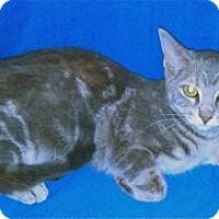 Adopt A Pet :: K-Sasha7-Eleanor - Colorado Springs, CO