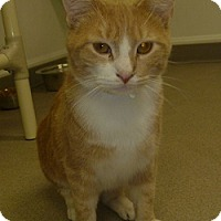 Adopt A Pet :: Jasper - Hamburg, NY