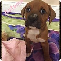 Adopt A Pet :: Autumn - Marlton, NJ