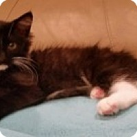 Adopt A Pet :: London - McHenry, IL