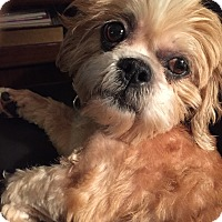 Adopt A Pet :: Buttons - Troy, MI