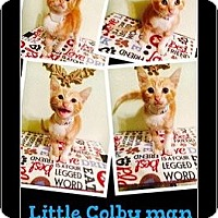 Adopt A Pet :: Colby - Beaumont, TX