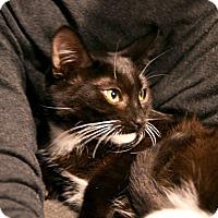 Adopt A Pet :: Tux - Los Angeles, CA