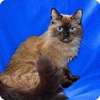 Adopt A Pet :: Mya - Buford, GA