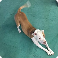Adopt A Pet :: Willie Nelson~ Prof Trained~ - Columbus, OH