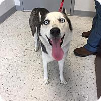 Adopt A Pet :: Sky - Humble, TX