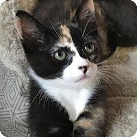 Adopt A Pet :: Merlot - North Highlands, CA