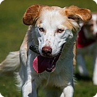 Adopt A Pet :: Mickey - Rigaud, QC