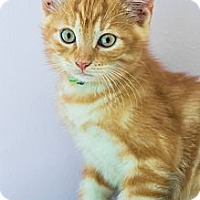 Adopt A Pet :: Archie - Montreal, QC