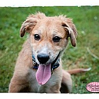 Adopt A Pet :: Freemont - Haverhill, MA