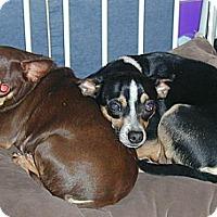 Adopt A Pet :: Jake - Homer Glen, IL