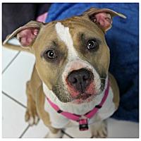 Adopt A Pet :: Celeste - Forked River, NJ