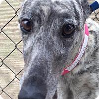 Adopt A Pet :: CRT Olivia - Longwood, FL