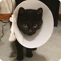 Adopt A Pet :: Murray - St. Louis, MO