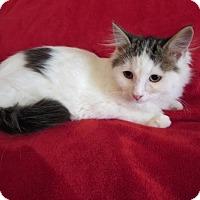 Adopt A Pet :: Rossi - Hamilton, ON