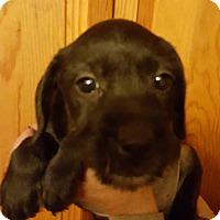 Adopt A Pet :: Roni - Medora, IN