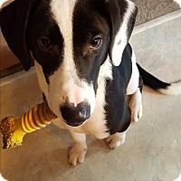 Adopt A Pet :: Rocko - Silverdale, WA